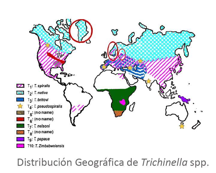 trichinella_geografia.JPG
